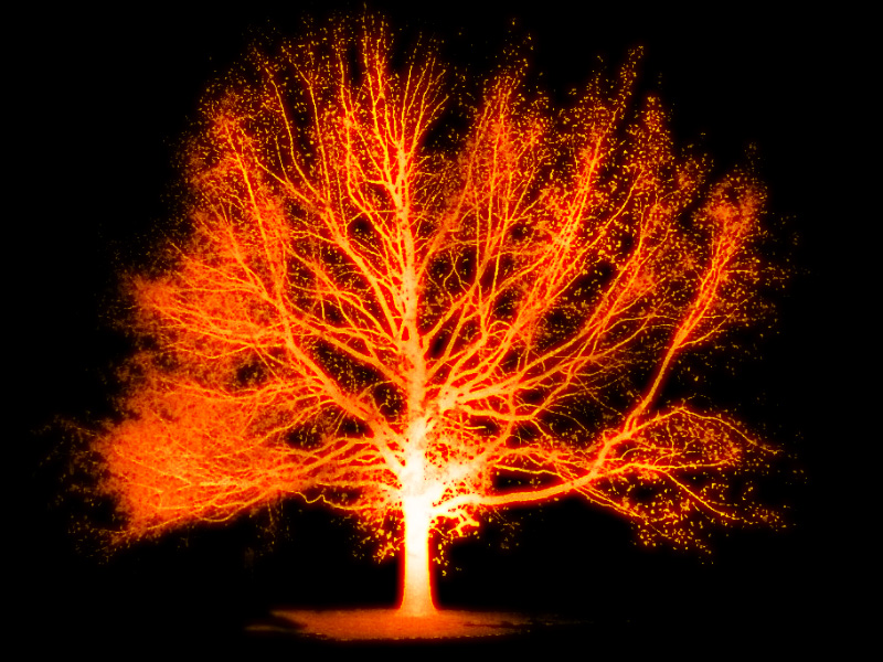 "Burning tree by <a href=""http://beingstoned.deviantart.com/art/Burning-tree-271715181"" target=""_blank"">beingstoned on DeviantArt</a>"